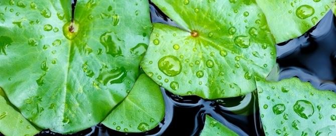 Lotuseffekt - Von der Natur abgeschaut